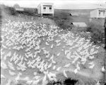 [Hillside Poultry Farm]